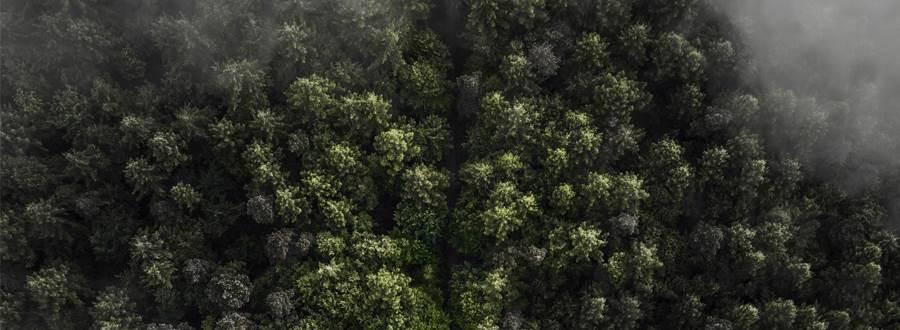 Foggy Trees 900X330
