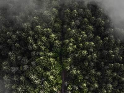 Trees Adn Fog 800X600